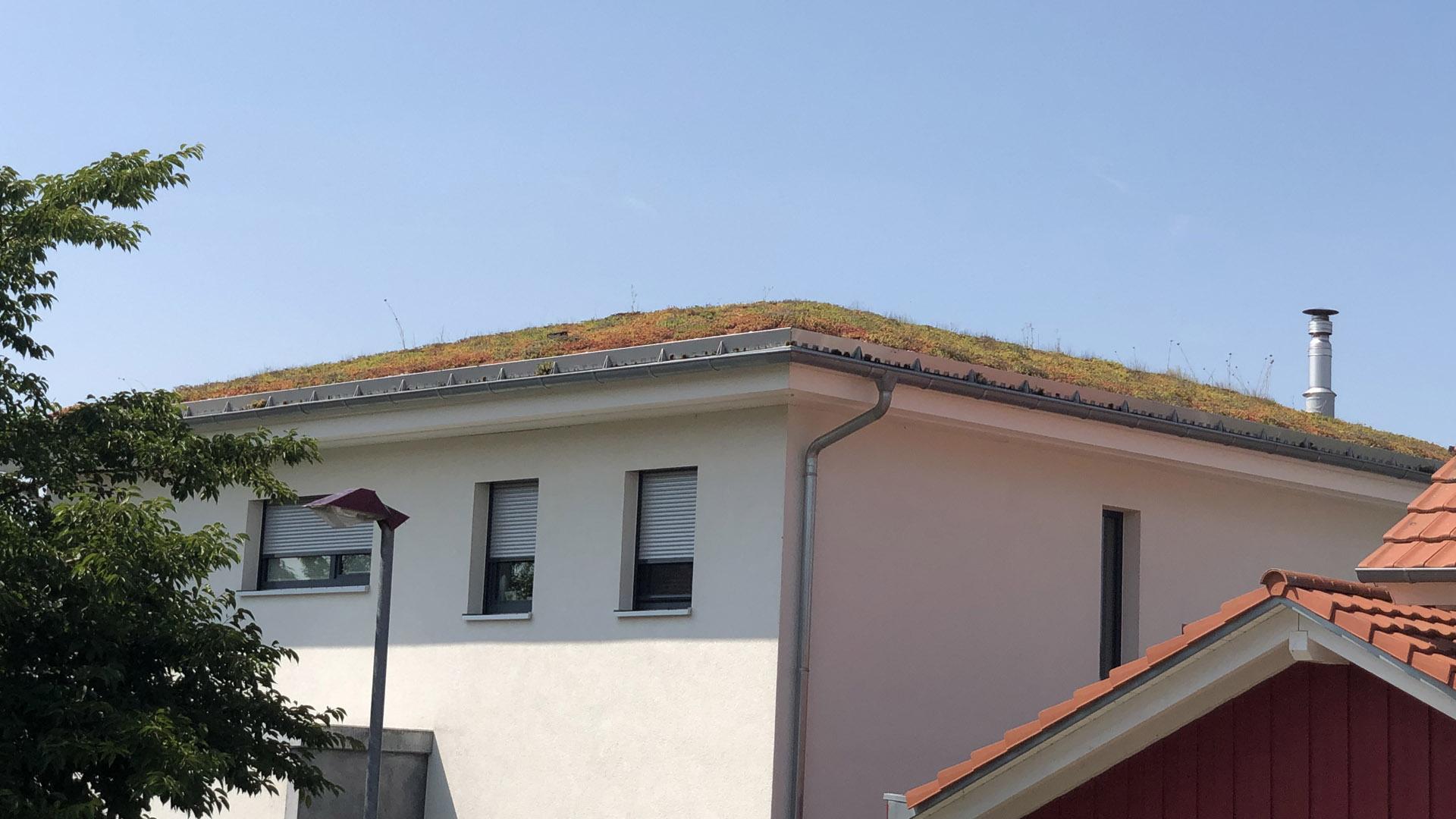 Holzbau-ott-guendlingen-dachbegruenung1