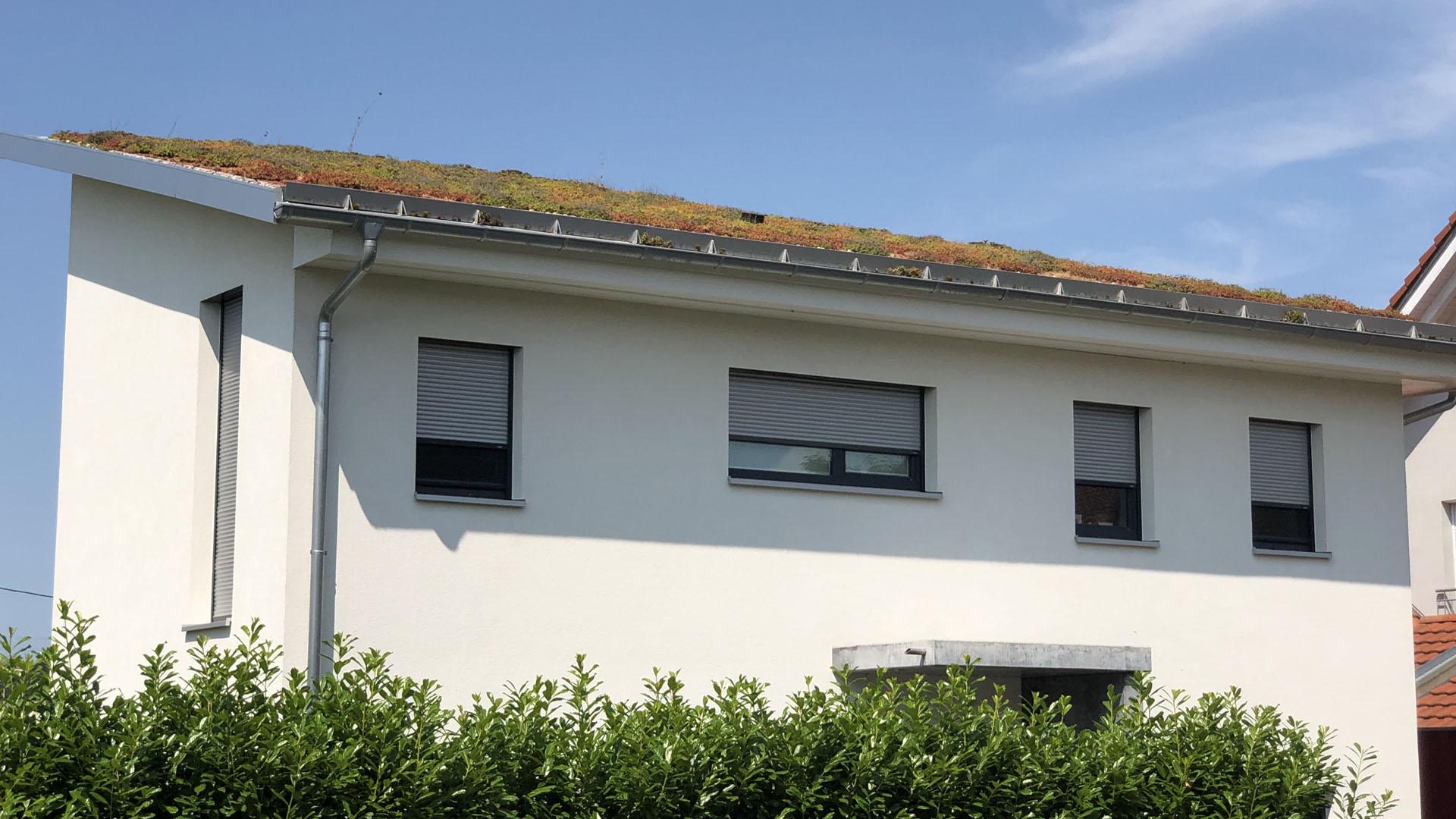 Holzbau-ott-guendlingen-dachbegruenung3